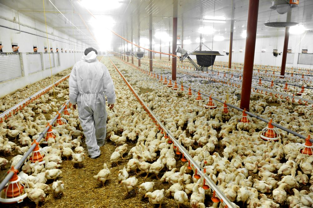 Biosecurity for Animal Producers and Food Processors